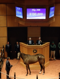 Hip 296, 2016 Fasig-Tipton Kentucky Winter Mixed Sale