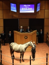 Hip 315, 2016 Fasig-Tipton Kentucky Winter Mixed Sale