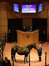 Hip 403, 2016 Fasig-Tipton Kentucky Winter Mixed Sale