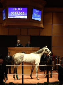 Hip 426, 2016 Fasig-Tipton Kentucky Winter Mixed Sale