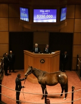 Hip 431, 2016 Fasig-Tipton Kentucky Winter Mixed Sale