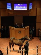 Hip 522, 2016 Fasig-Tipton Kentucky Winter Mixed Sale