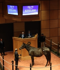 Hip 55, 2016 Fasig-Tipton Kentucky Winter Mixed Sale
