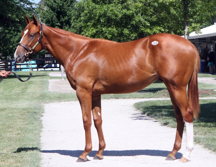 Hip 222, 2016 Fasig-Tipton July Yearling Sale