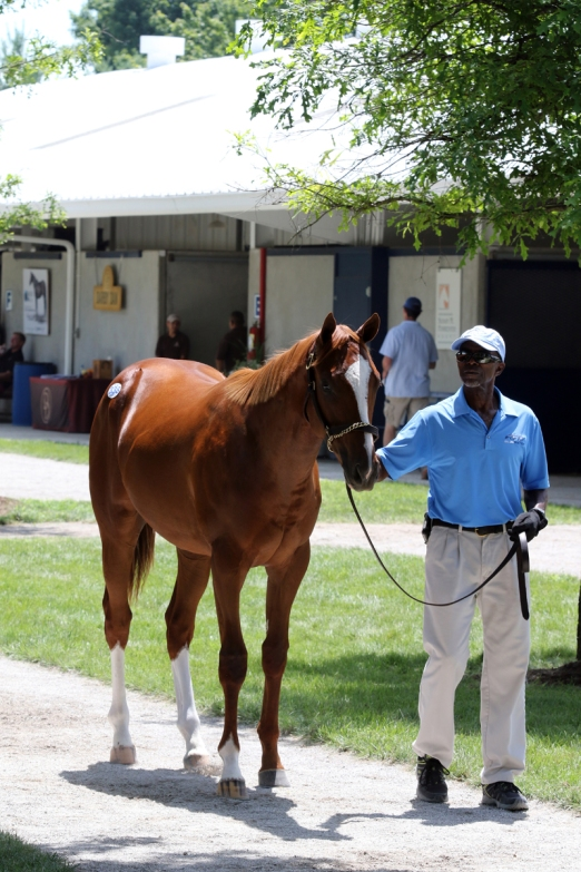 Hip 338,  2016 Fasig-Tipton July Yearling Sale