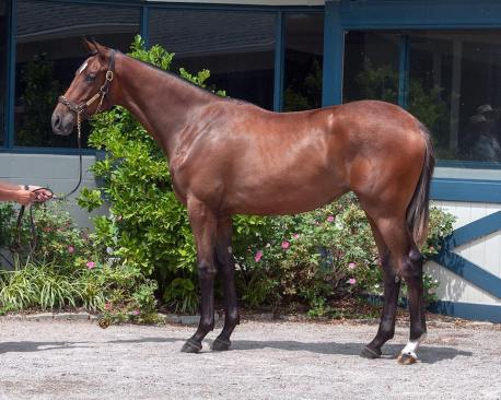 168 f. Tapit-Super Espresso (Bluewater Sales) I THINK 2