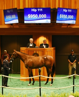 Hip 111, 2016 Fasig-Tipton Saratoga Selected Yearling Sale