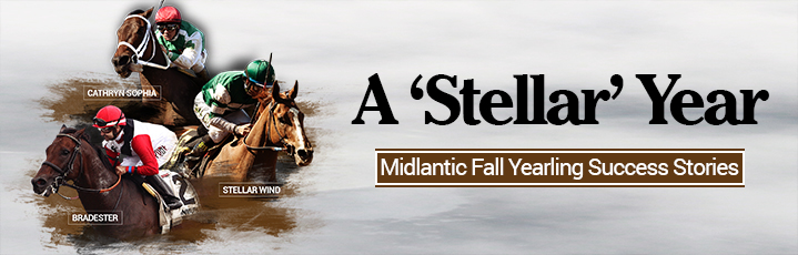 A 'Stellar' Year for Midlantic Fall Yearling Sale Grads