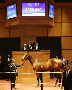 Hip 1034, 2015 Fasig-Tipton October Sale