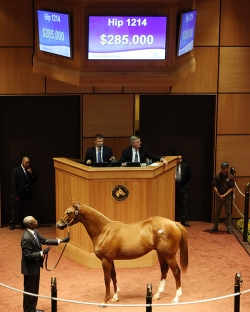 Hip 1214, 2015 Fasig-Tipton October Sale