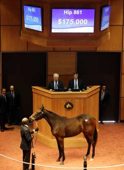 Hip 861, 2015 Fasig-Tipton October Sale