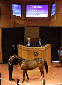 Hip 862, 2015 Fasig-Tipton October Sale