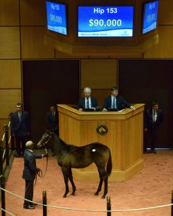 Hip 153, 2017 Fasig-Tipton Winter Mixed Sale