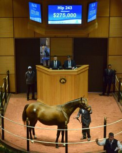 2017 Fasig-Tipton Winter Mixed Sale