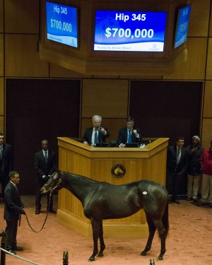 Hip 345, 2017 Fasig-Tipton Winter Mixed Sale