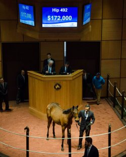 Hip 492, 2017 Fasig-Tipton Winter Mixed Sale