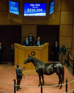 Hip 622, 2017 Fasig-Tipton Winter Mixed Sale