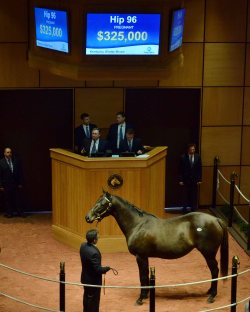 Hip 96, 2017 Fasig-Tipton Winter Mixed Sale