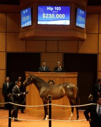 Hip 103, 2017 Fasig-Tipton July Sale