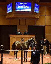 Hip 194, 2017 Fasig-Tipton July Sale