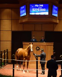 Hip 248, 2017 Fasig-Tipton July Sale