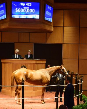 Hip 423, 2017 Fasig-Tipton July Sale