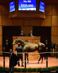 Hip 500, 2017 Fasig-Tipton July Sale