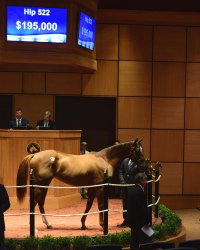 Hip 522, 2017 Fasig-Tipton July Sale