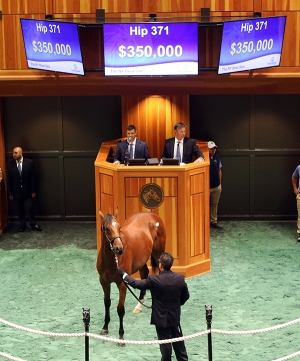 Hip 371, 2017 Fasig-Tipton Saratoga New York Bred Sale
