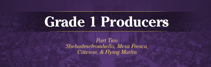 The November Sale: Grade 1 Producers, Part 2