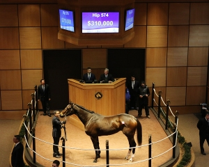 Hip 574, 2018 Fasig-Tipton Winter Mixed Sale
