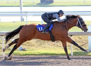 2018 Fasig-Tipton Gulfstream 2 Y Olds in Training Sale