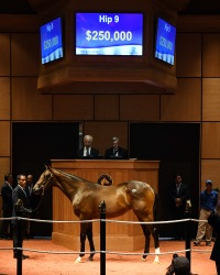 Hip 9, 2018 Fasig-Tipton July Sale